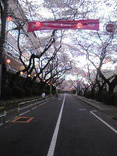 桜〜桜〜♪